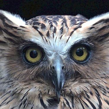 ausflugsziele owl